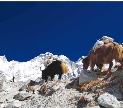 Everest Gokyo Lake Trekking-15Nights 16Days